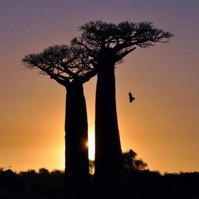 Baobab2kQ-web